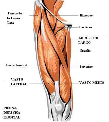 ejercicio musculo oblicuo:
