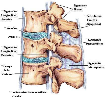 El dolor que tira en los riñones que da en la extremidad inferior